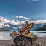 Foto Friday – Weathered Stump on Lake McDonald