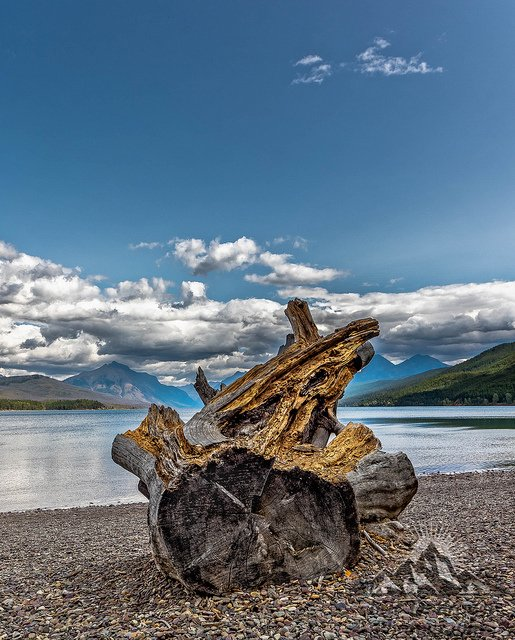 Weathered Stump on Lake McDonald