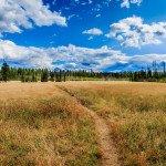 A meadow off of Camas Road in Glacier National Park.
