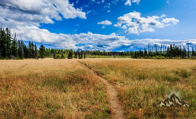 A meadow off of Camas Road in Glacier National Park.