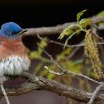 Foto Friday – Bluebird at Rest