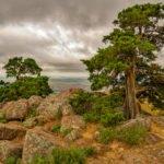 Foto Friday – Trees on Mount Scott, Wichita Mountains Wildlife Refuge