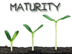 Digital Transformation or Digital Maturity